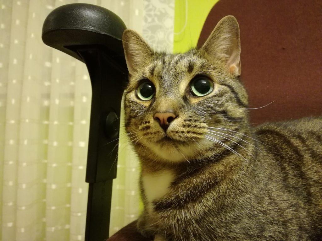 Boromir the CAT