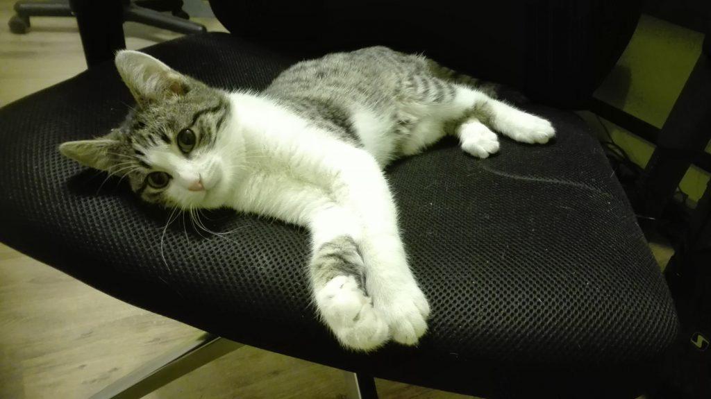 translators cat